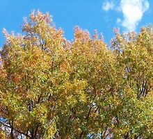 Fall in Topeka 1 by heatherlynn