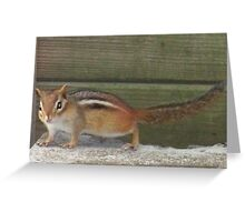 Photogenic Chipmunk Greeting Card