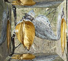 Milkweed Pods - Mirror Box by MotherNature