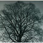black and white tree by heatherlynn
