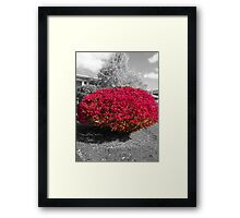 Colorized Burning Bush Framed Print