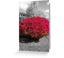 Colorized Burning Bush Greeting Card