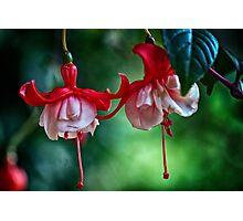 Fuchsia in HDR Photographic Print
