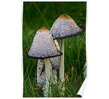 Cosy fungi Poster