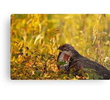 Prairie Chicken Metal Print