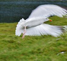Mountain Seagull by melek0197