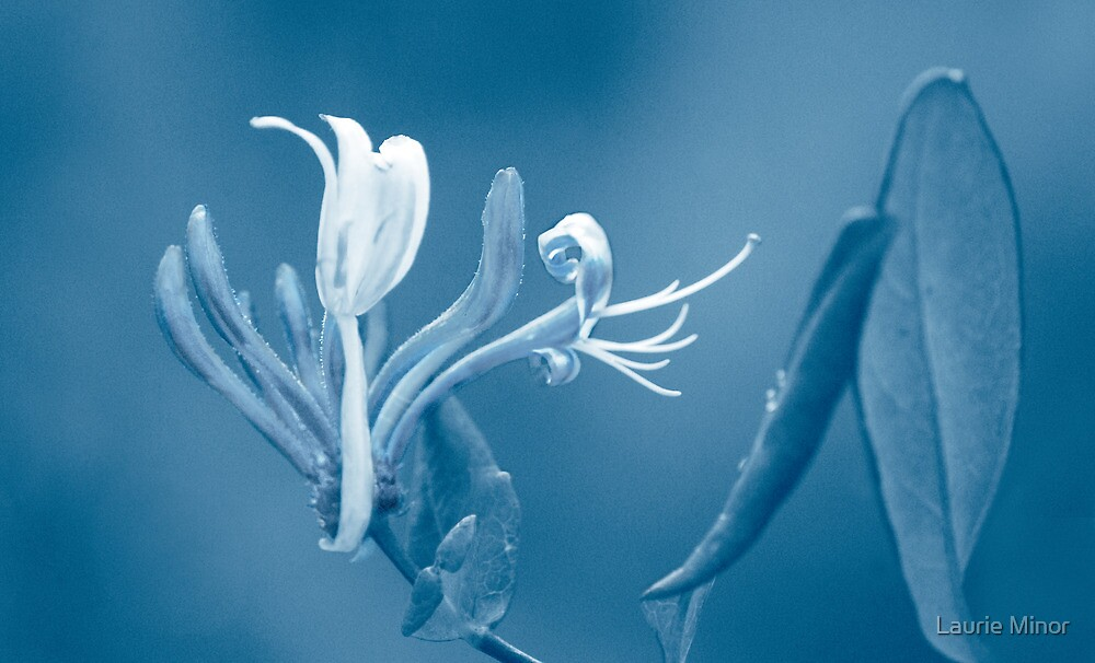 A Paler Shade of Blue by Laurie Minor