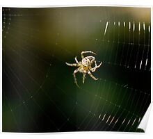 Spider spinning web Poster