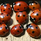Ladybirds by Hannah Welbourn