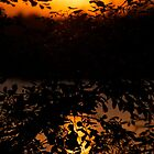 Sunset Among Leaves by lindsycarranza
