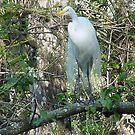 White Egret by Penny Rinker