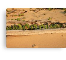 MCC Natures Window Canvas Print