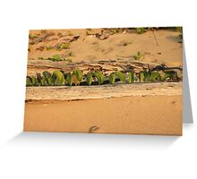 MCC Natures Window Greeting Card