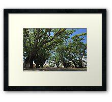MCC Mossman Raintrees Framed Print