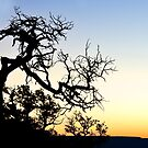 Grand Canyon Silhouette by RayDevlin