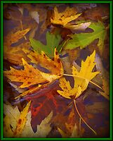 Wet Leaves by BarbL