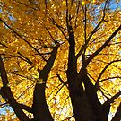 The Beauty of Trees by lorilee
