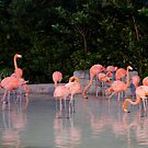 A Gathering of Pink by Laurie Perry