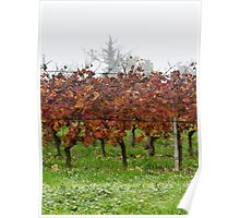 vineyard in the fog in autumn Poster