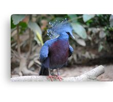 Victorian Crown Pigeon.  Canvas Print