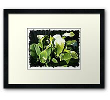 Lily Patch in my garden Framed Print