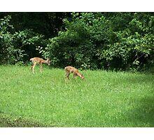 Babies III Photographic Print