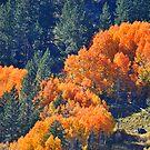 """Mountain Colors"" by Lynn Bawden"