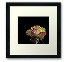 A rose by any name Framed Print