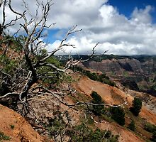 Waimea Canyon II by ZWC Photography