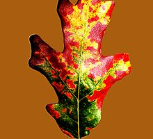 Colorful Autumn Oak Leaf by BamaBruce69