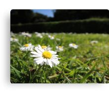 One in a million - Daisy Canvas Print