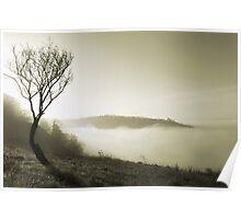 Misty Spring Morning Poster