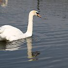 Swan  by pisarevg