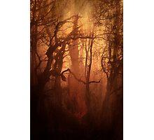 The Dark Woods Photographic Print