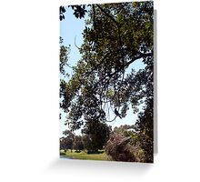 Bird In A Tree Two 08 10 12 Greeting Card
