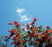 Bottle Brush In Spring Two by Robert Phillips
