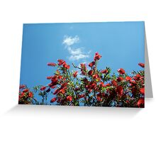 Bottle Brush In Spring Two Greeting Card