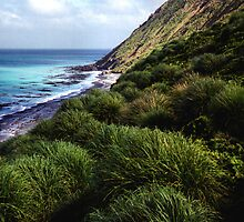 Coastal View, Maquarie Island by Carole-Anne