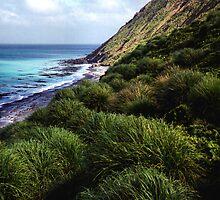 Coastal View, Maquarie Island by Carole-Anne