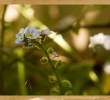 Life In The Undergrowth by reflector