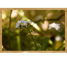 Life In The Undergrowth Photographic Print