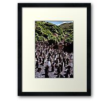 Royal Penguin Highway Framed Print