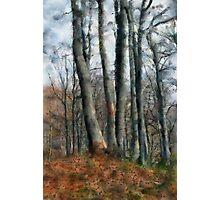 Bieszczady tree Photographic Print