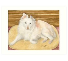 Mini Australian Shepherd Dog Cathy Peek Animals Art Print