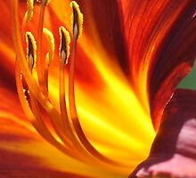 Lily on fire by Erwin Winkelman