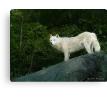 Call of the wild III Canvas Print