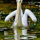 Pelican by M-A-K