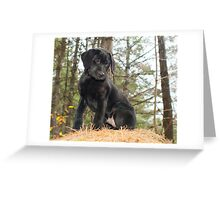 Midnight is here! Greeting Card