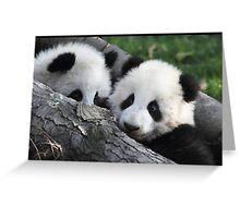 Panda feeding time Greeting Card