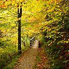Peaceful Stroll by Jeanne Sheridan
